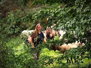 Schafe im Naturschutzgebiet Eichenhain Stuttgart Riedenberg 3.9.2015