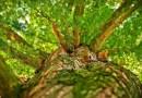 Waldluft statt Lüften – Vorschulkinder willkommen