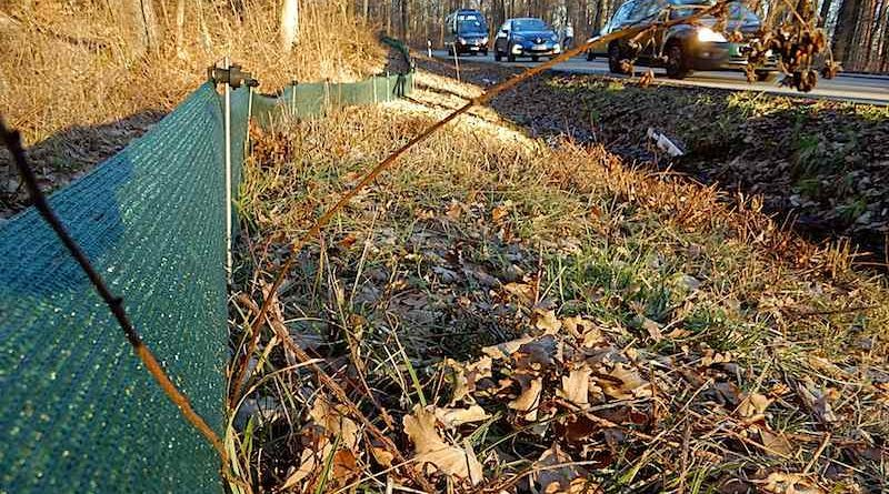 grüner Schutzzaun am Waldrand neben der Straße