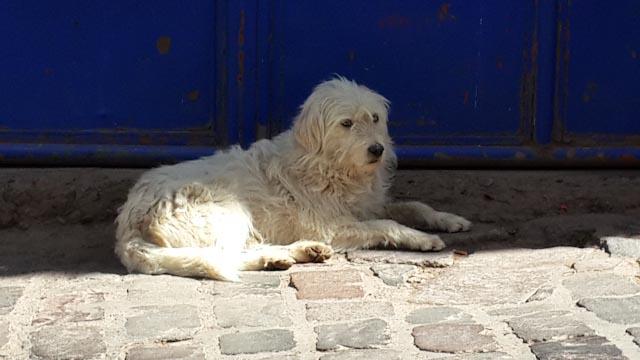 dogCusco