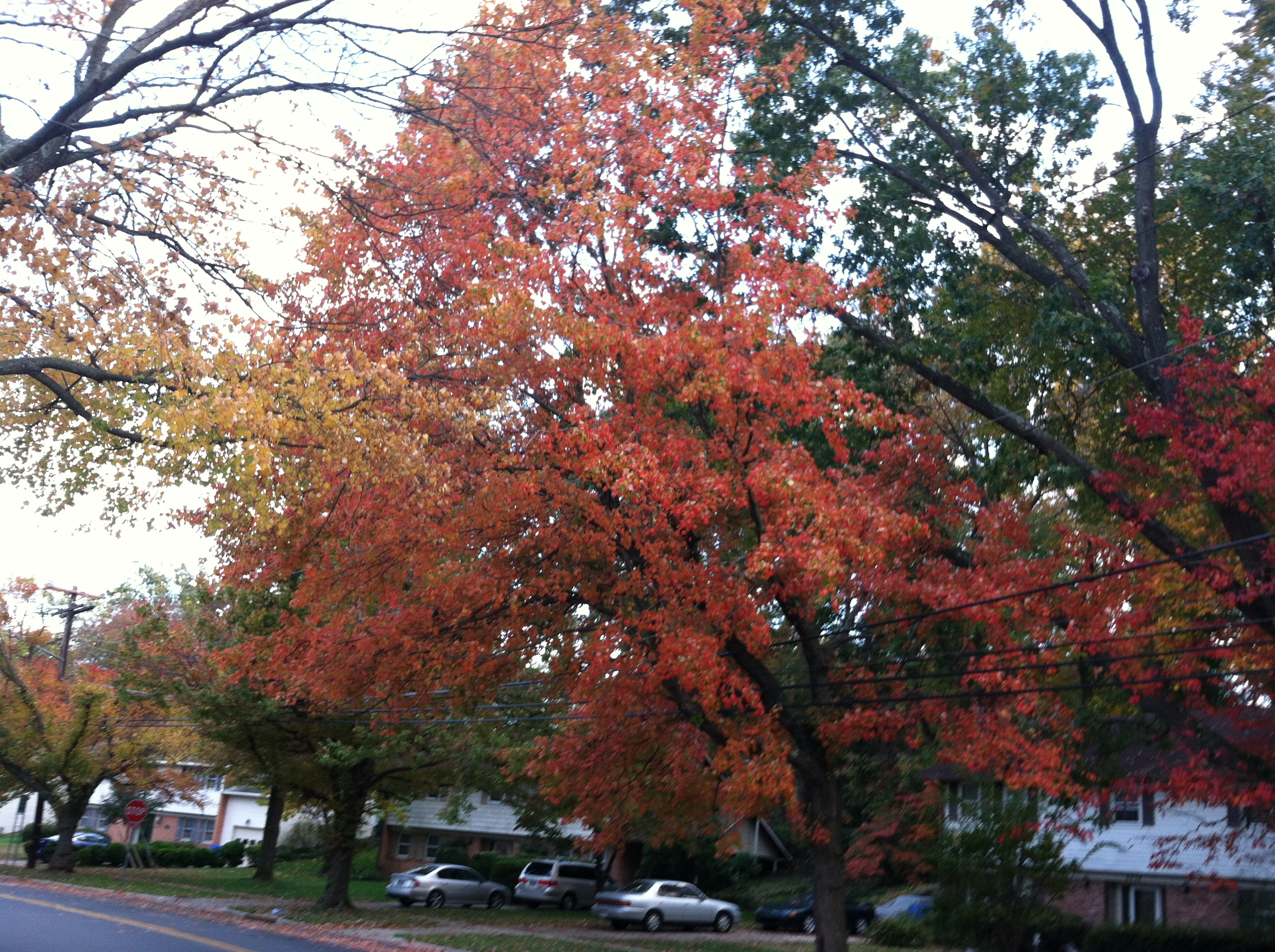 Falling Leaves And Changing Seasons