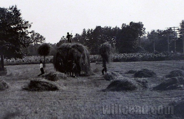 Gathering-hay-det