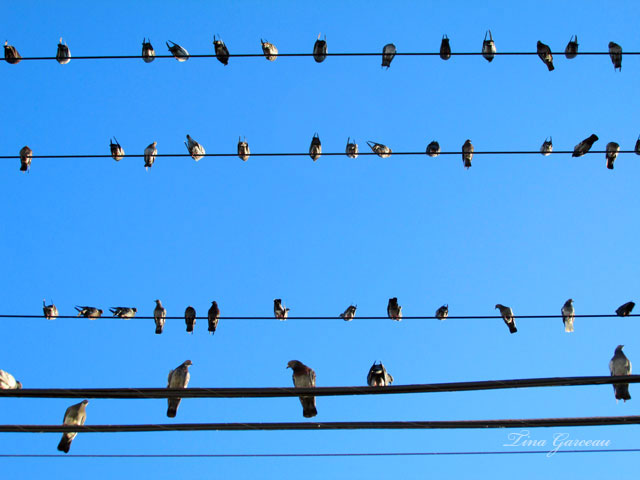 BirdsWire