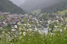 Morzine through daisies!