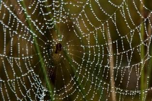 Dew on the webs