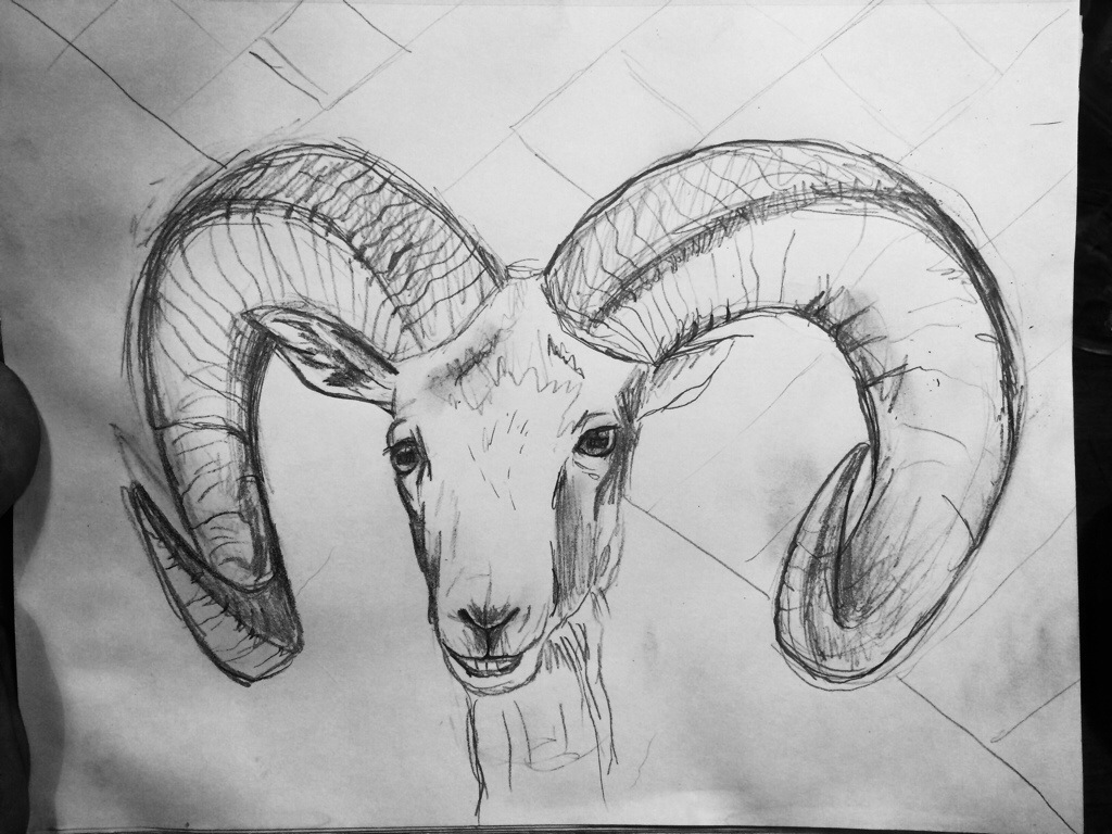 Original Sketch Big Horn Sheep Will Eskridge
