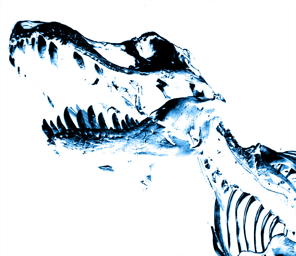 Five For Friday: Fossils