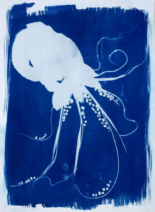 Deep Blue Octopus animal artist art cyanotype photogram Will Eskridge