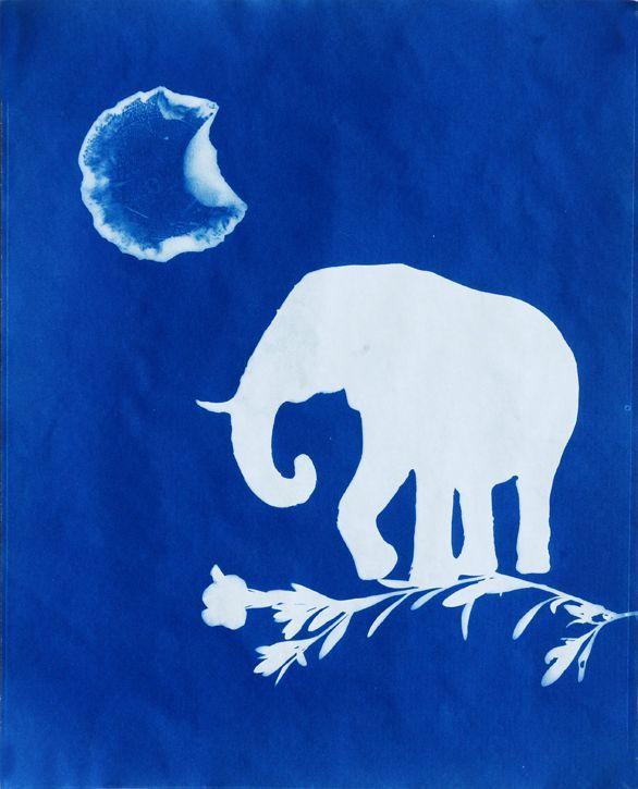 Elephas Waning