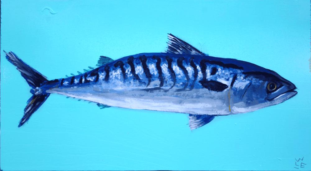 Atlantic Mackerel – Day 21