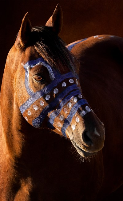 Lakota war pony with blue and white paint