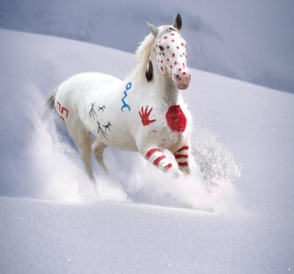 Art titled Snow Warrior. Painted War Pony running through mountain snow.