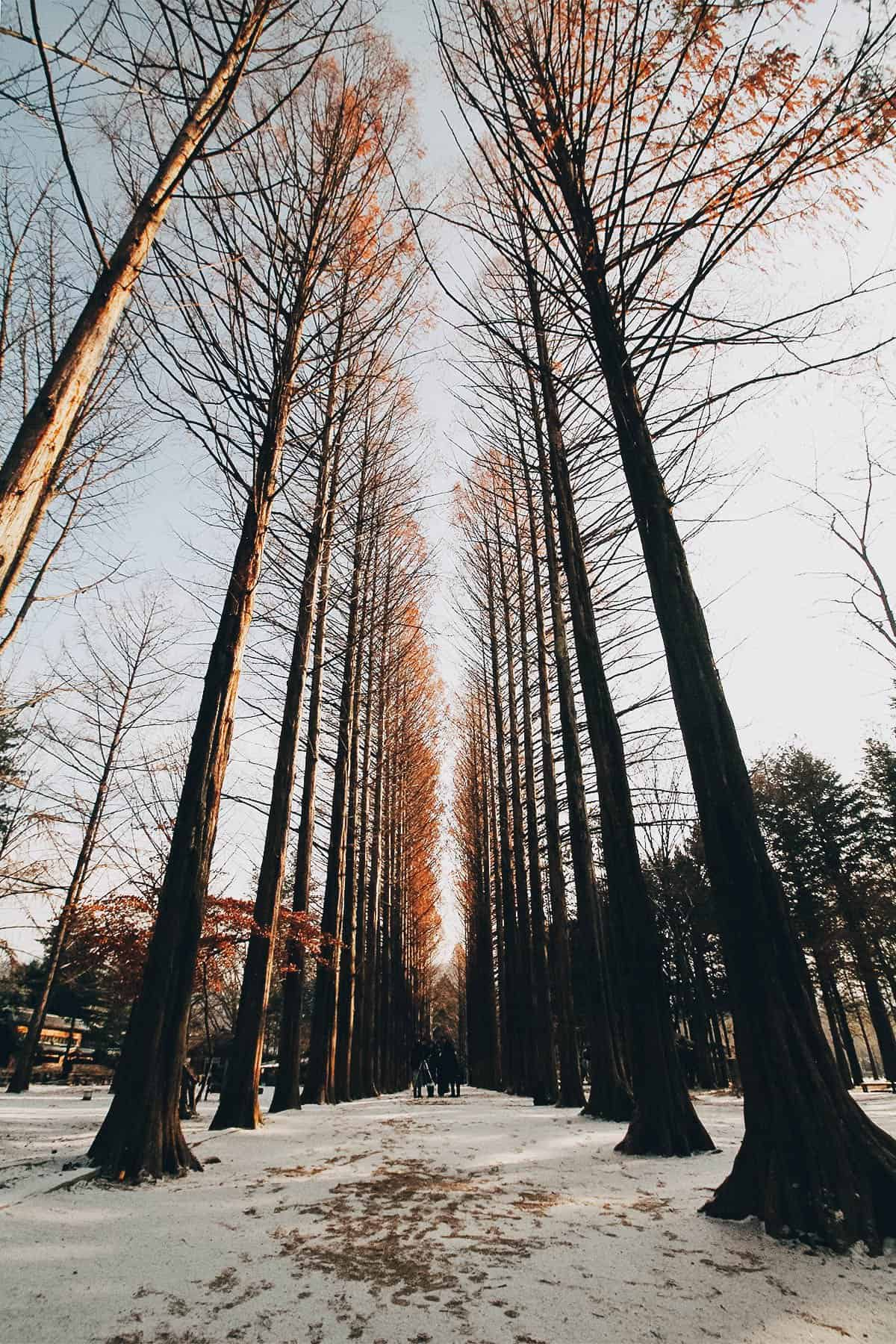 Nami Island Winter : island, winter, Visit, Island,, Gangchon, Park,, Petite, France, Seoul