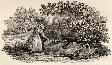 Old_Woman_with_Ducks_tail-piece_in_Bewick_British_Birds_1804