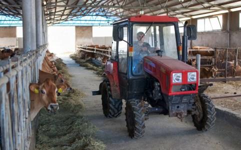 Dairy Farmer in Lusadzor_WilliamBairamian.me