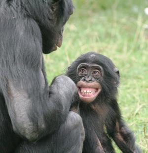 Bonobo_Happy