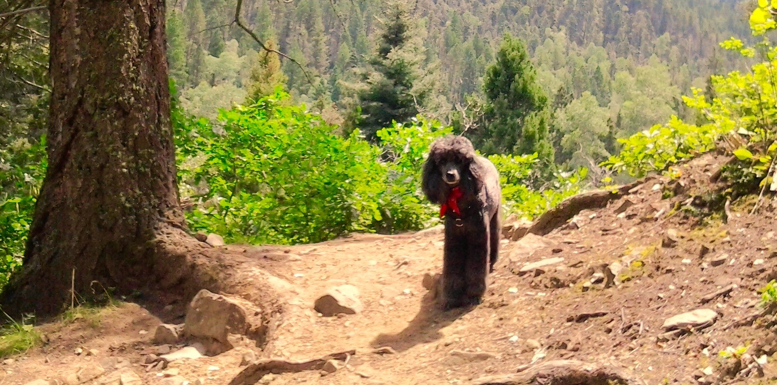 Dogs on Hiking Trails