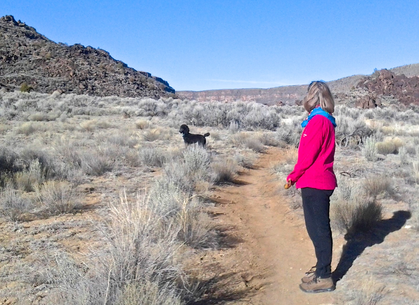 Stanzi, the Hiker-Dog, Meets Big Horn Sheep!