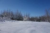 Untouched Fields