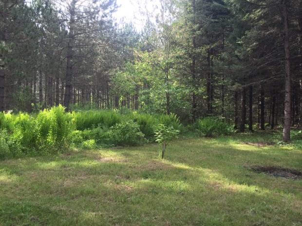 Light Settling in the Woods