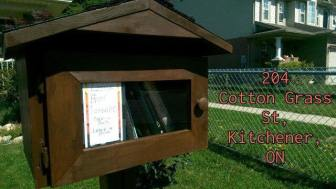 library cotton grass