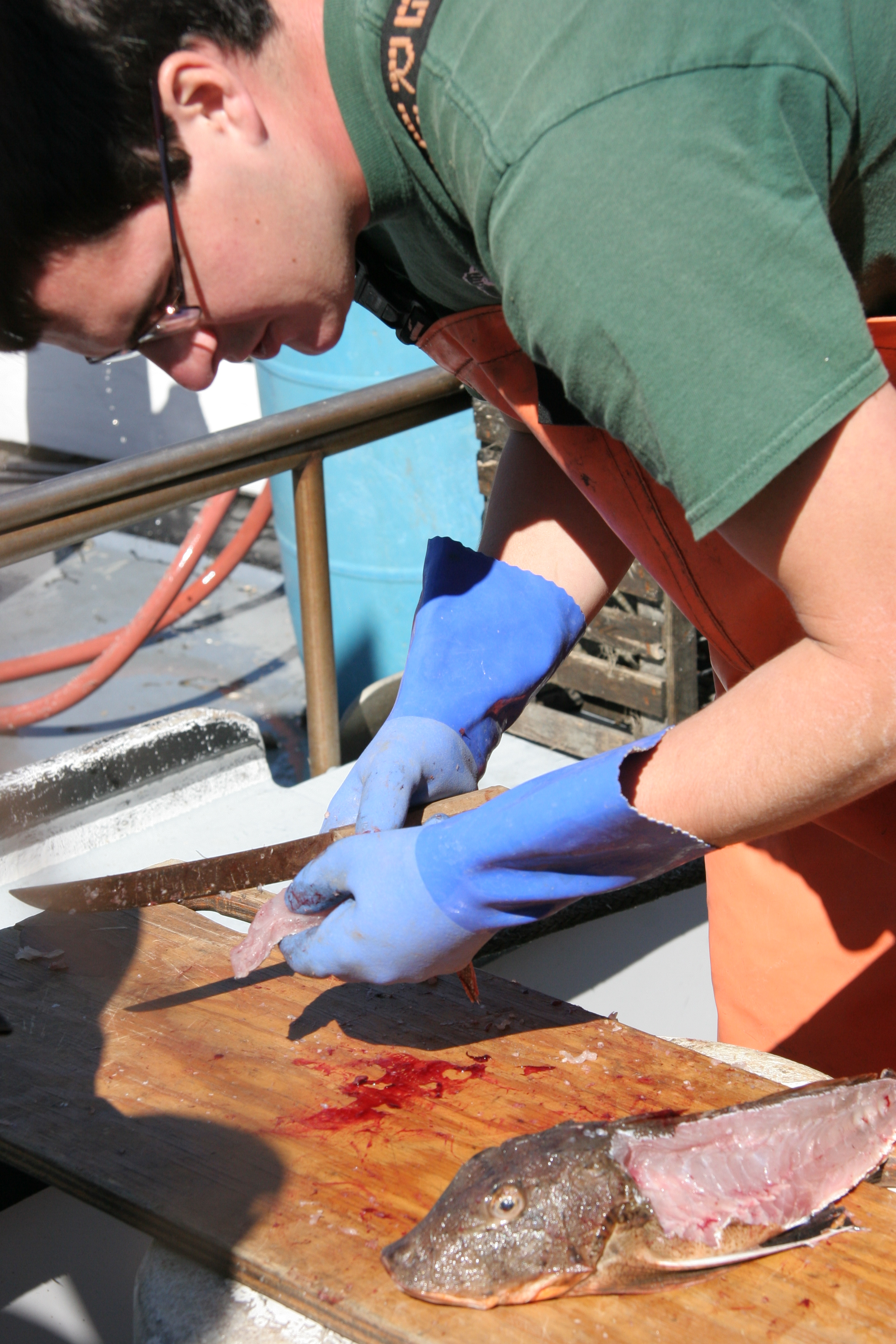 How to Fillet a Sea Robin