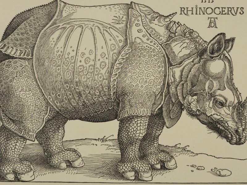 Durer's Rhinocervs