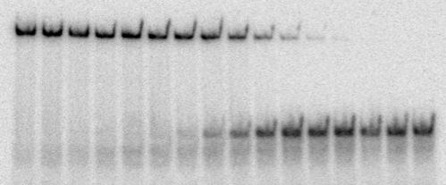 RNA-Protein Biochemistry