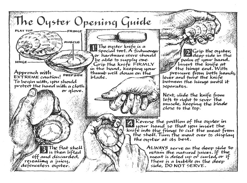 Oyster opening guide for a restaurant brochure, calligraphy & illustration - pen & ink