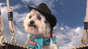 Western wear Frankie