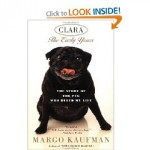 Clara the pug
