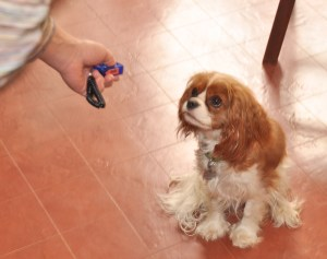 Chloe loves the clicker
