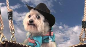 Cowboy Frankie