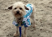 """Frankie says """"Just get me to the beach, already!"""""""