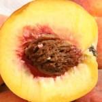 Peach Seed Survival Fishing Hook