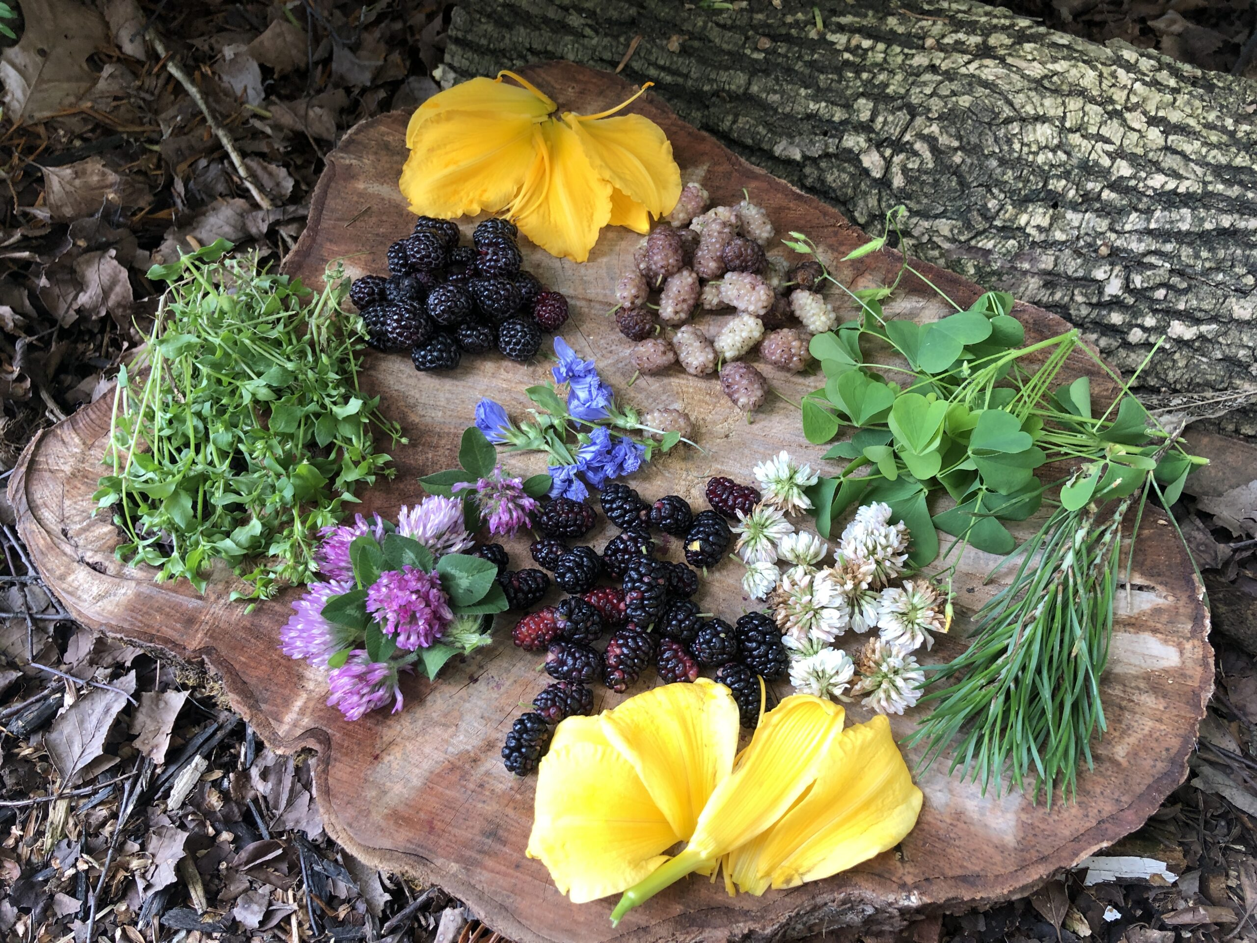 Building Confidence in Your Wild Edible Foraging Skills
