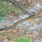 Dealing With Venomous Snakebites