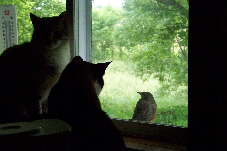robinwatching