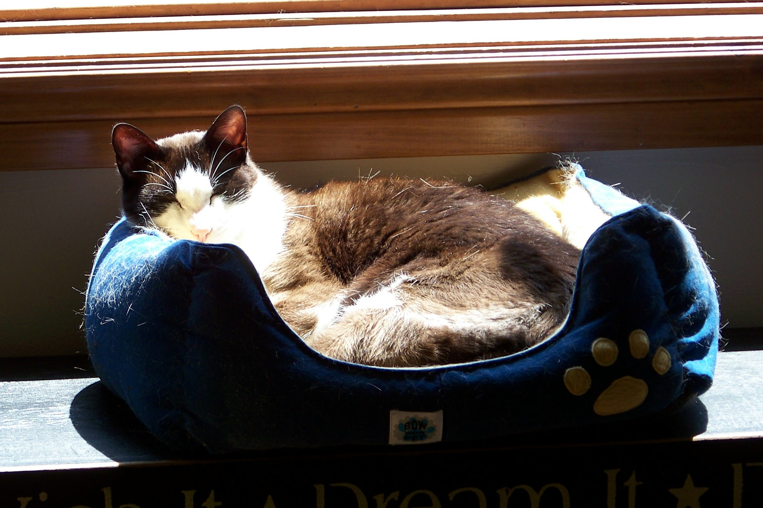 Traditionalist Tonka, snoozing in the cat bed.