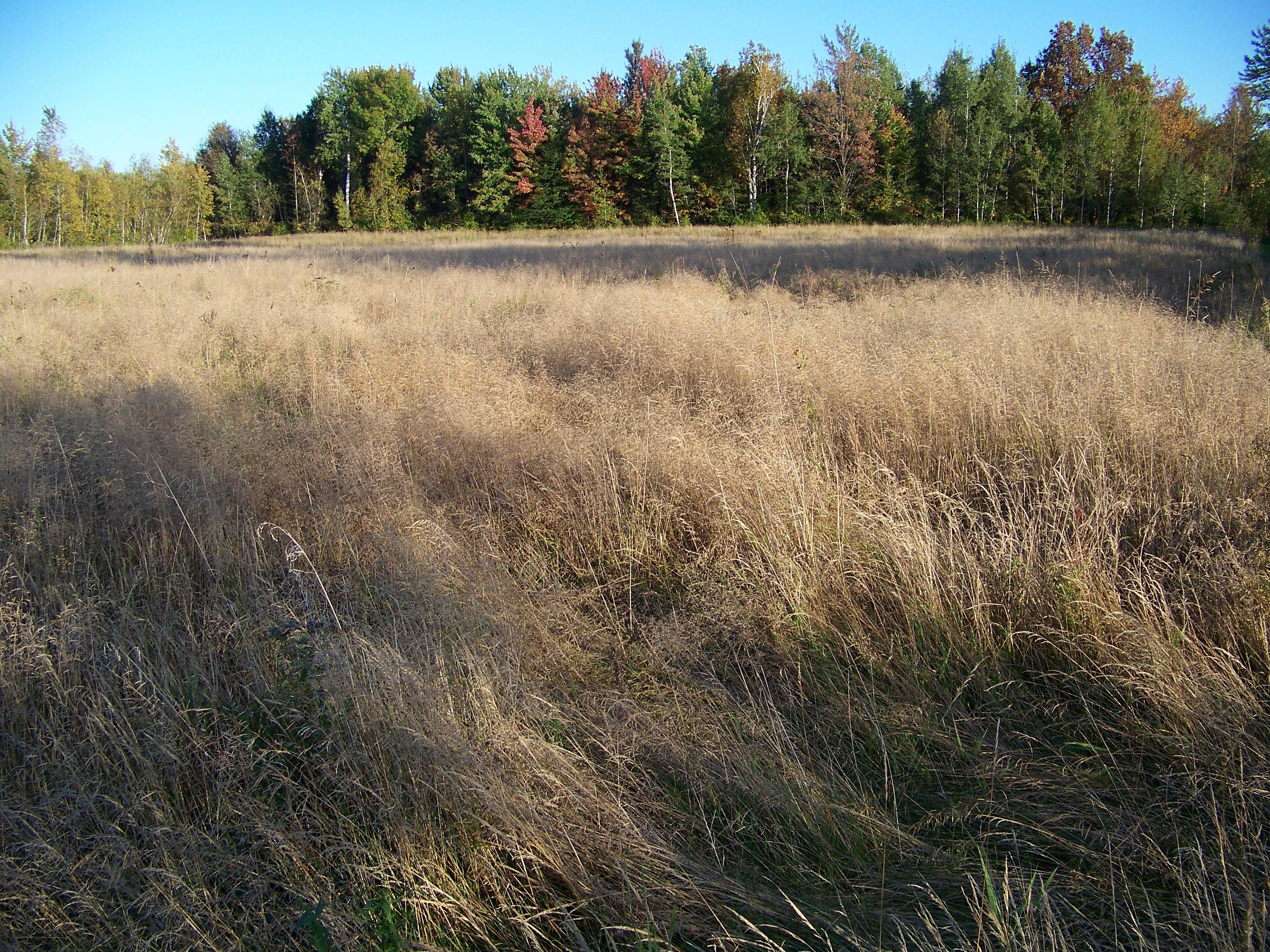 walkgrassfield