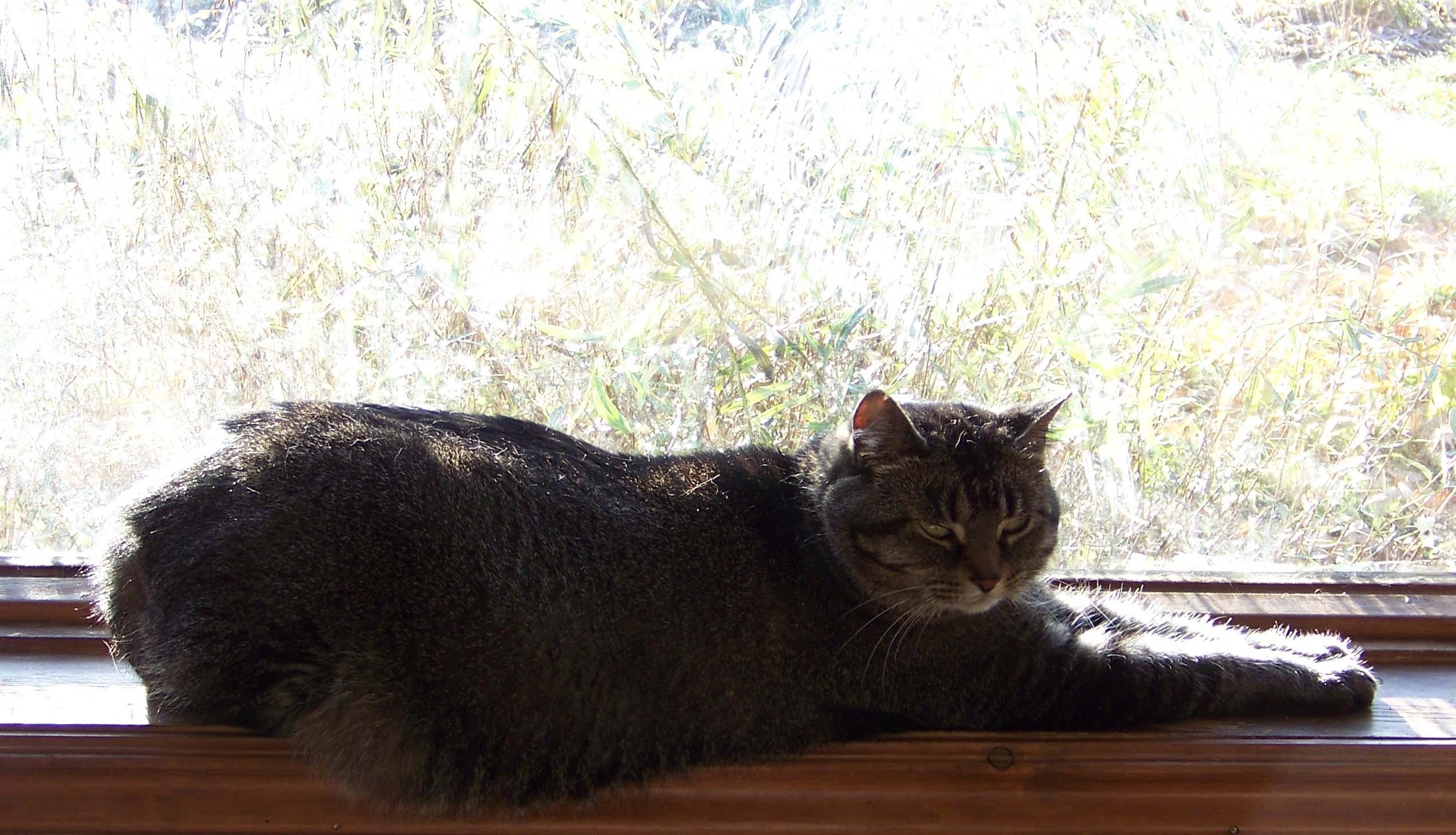 morningfrostmomcat