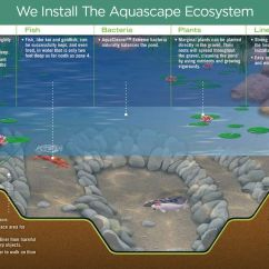 Building A Koi Pond Diagram Labelled Of Xylem And Phloem Builder Knoxville Tn Installers Design
