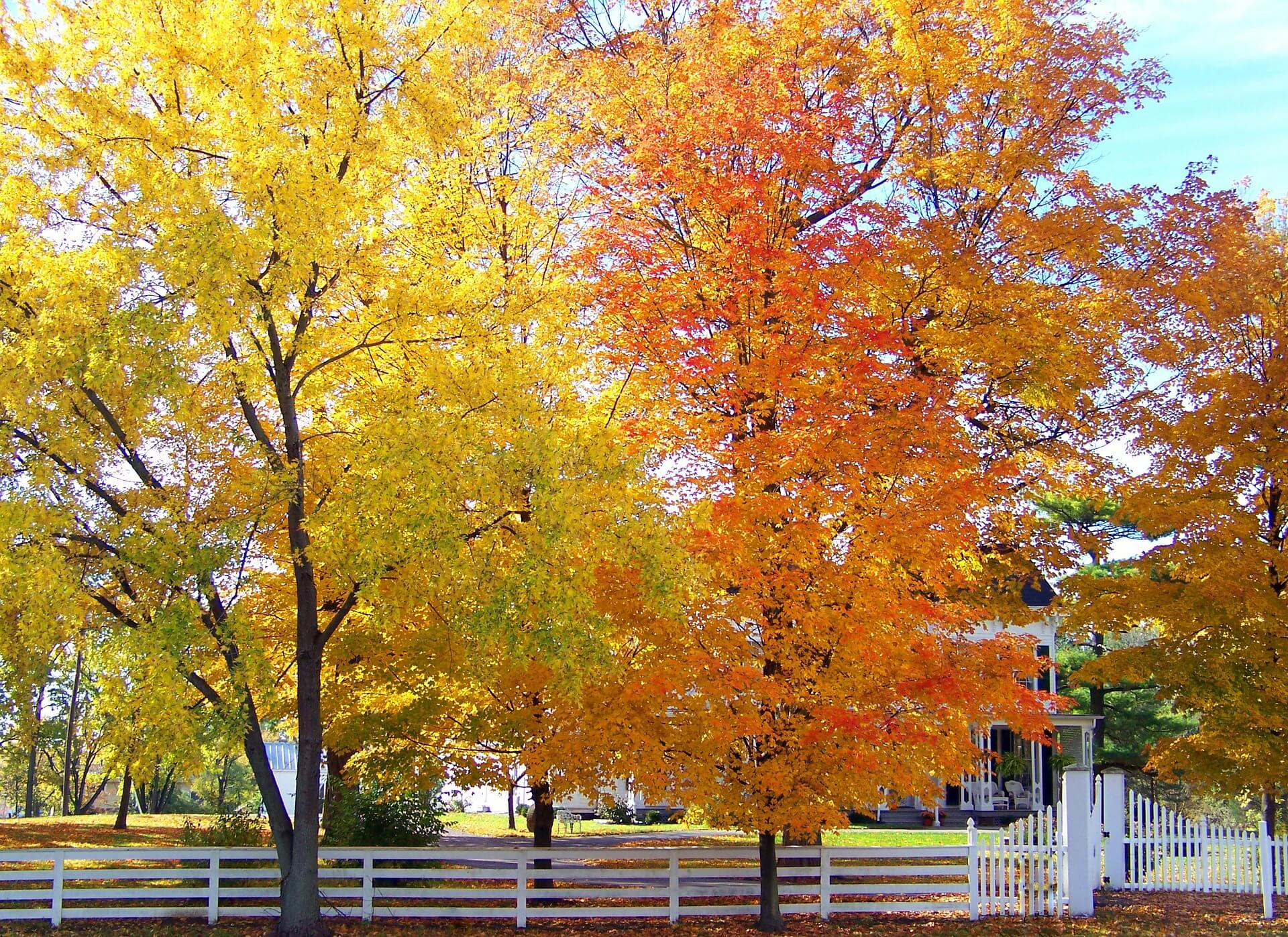 Free Fall Foliage Wallpaper Why Plant A Tree Willow Ridge Knoxville Oak Ridge