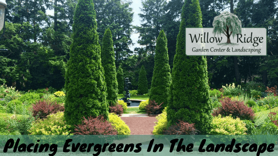 guidelines placing evergreens