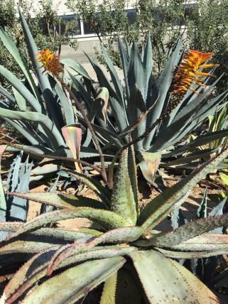 Fieseste Stachelpflanze, die wir je gesehen haben