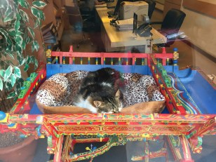 Schaufenster-Kitty #2