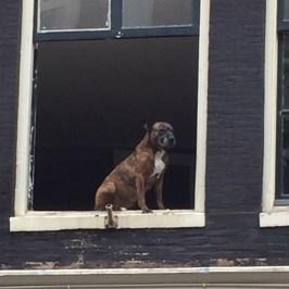 Coolest doggie in Nahaufnahme