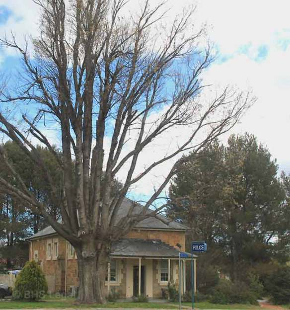 Bungendore Courthouse (former), Bungendore Courthouse, early Australian courthouses, Colonial Australian courthouses, historical Australian courthouses, Australian legal history, Bungendore