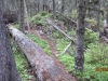 Lots of deadfall not the best of routes