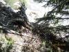 Typical bushwack around Exshaw Creek